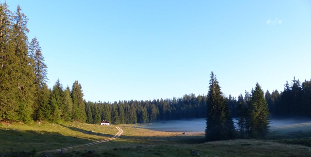 Wiese mit Nebel, im Hintergrund Hütte und Nadelwald