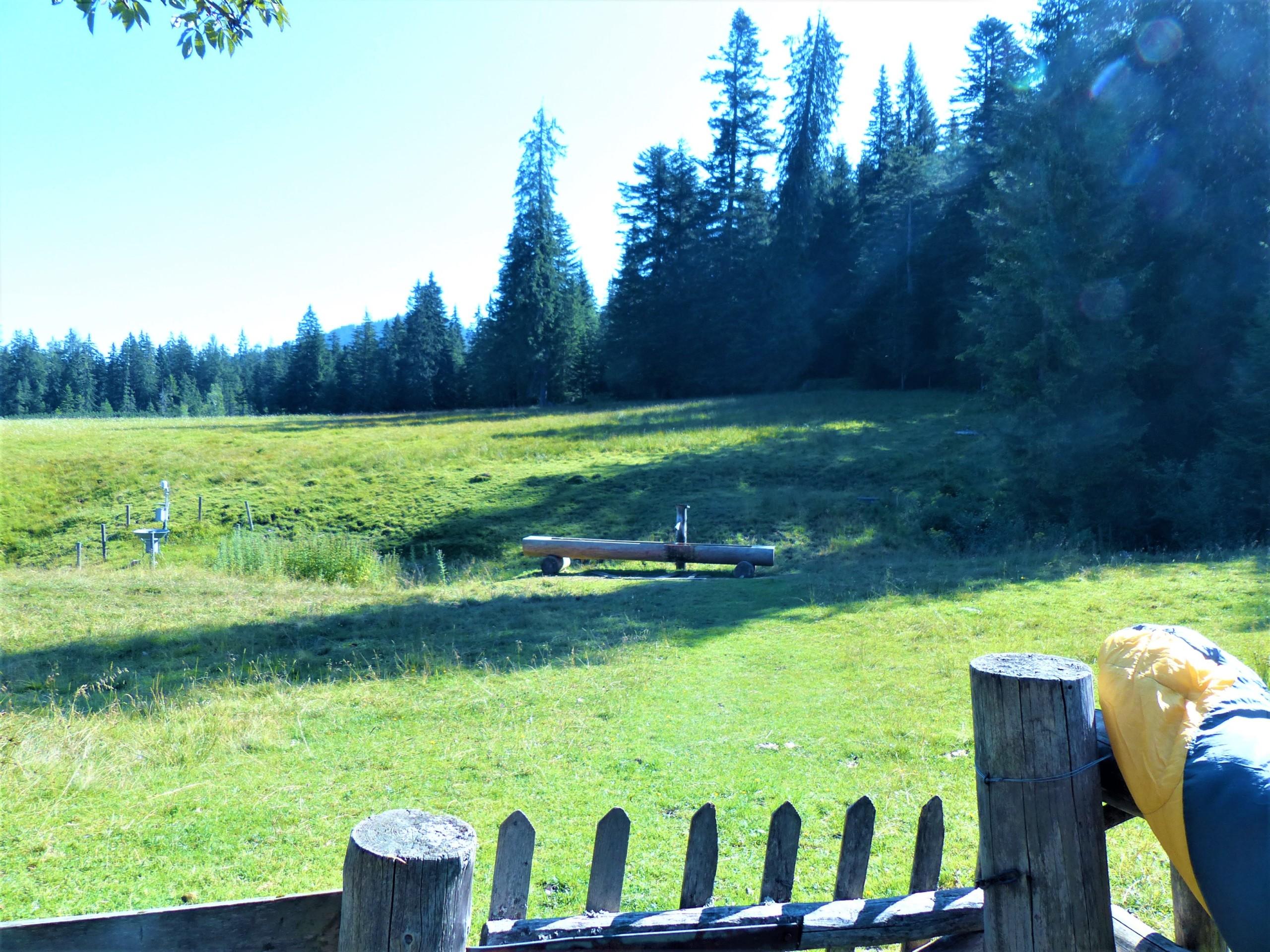 Holztränke auf einer Wiese mit Wald im Hintergrund